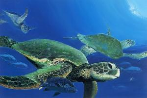 Green Sea Turtles by Durwood Coffey