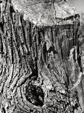 Tree Trunk by Dusan Stanimirovitch