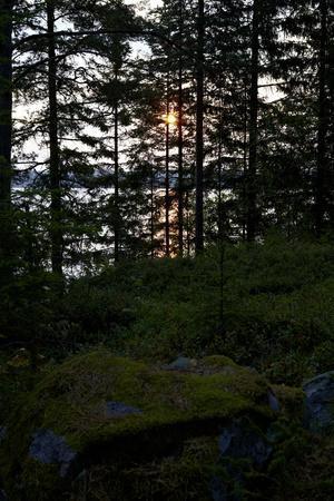 https://imgc.allpostersimages.com/img/posters/dusk-wood-shore-lelang-lake-dalsland-sweden_u-L-Q1EXS2A0.jpg?artPerspective=n