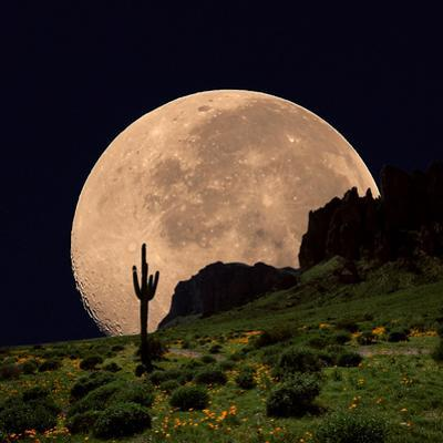 Coyote Moon Southwestern Cactus Mountain by Dusty Pixel photography