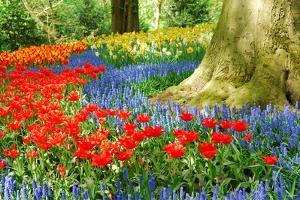 Colorful Spring Flowers in Dutch Spring Garden 'Keukenhof' in Holland by dzain