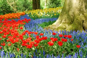 Colorful Spring Flowers in Dutch Spring Garden 'Keukenhof' in Holland by dzain