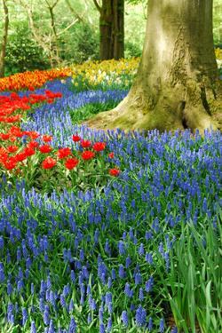 Colorful Springflowers in Dutch Spring Garden 'Keukenhof' in Holland by dzain