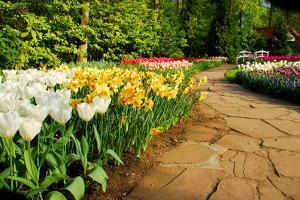 Colorful Tulips in Dutch Spring Garden 'Keukenhof' in Holland by dzain