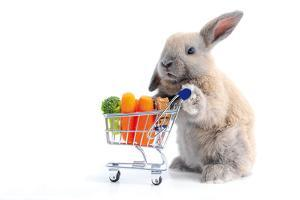 Cute Bunny Shopping for His Favorite Snacks with Shopping Cart by dzain