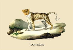 Panthere by E.f. Noel
