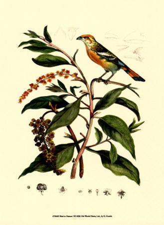 Bird in Nature I