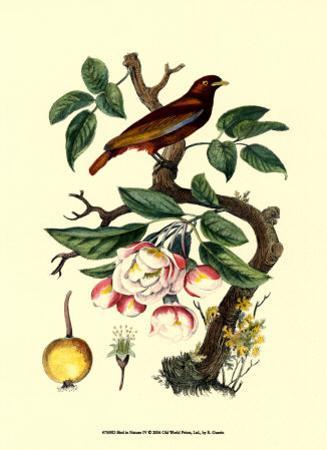 Bird in Nature IV