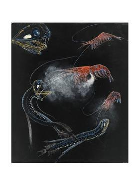 Painting of Shrimp and Fish of the Abyss by E.J. Geske