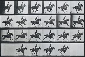 Bouquet, Galloping, Eadward Muybridge by Eadweard Muybridge