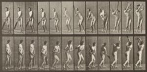 Cricketer, Plate 291 from 'Animal Locomotion', 1887 by Eadweard Muybridge