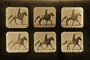 Horses. Irregular, 'Animal Locomotion' Series, C.1881 by Eadweard Muybridge