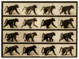 Image Sequence of a Baboon Running, 'Animal Locomotion' Series, C.1887 by Eadweard Muybridge
