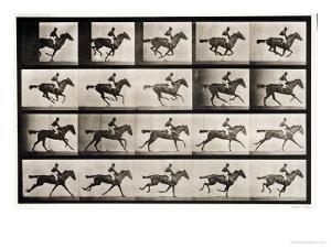 "Jockey on a Galloping Horse, Plate 627 from ""Animal Locomotion,"" 1887 by Eadweard Muybridge"