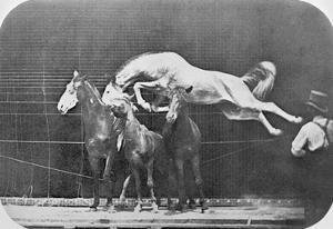 Jumping over Three Horses...Chestnut Horse Hornet by Eadweard Muybridge
