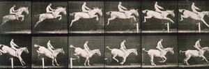 Man and horse jumping a fence, plate 643 from 'Animal Locomotion', 1887 by Eadweard Muybridge