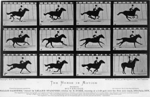 Movements of a Galloping Horse by Eadweard Muybridge
