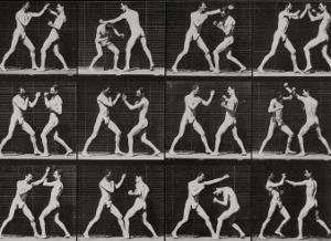 Phases in a Boxing Match by Eadweard Muybridge