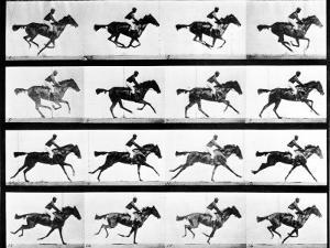 Photographer Eadweard Muybridge's Study of a Horse at Full Gallop in Collotype Print by Eadweard Muybridge