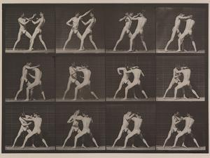 Plate Number 340. Boxing; open hand , 1887 by Eadweard Muybridge
