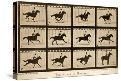 The Horse in Motion, 'Animal Locomotion' Series, C.1878