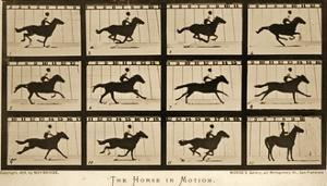 The Horse in Motion, 'Animal Locomotion' Series, C.1878 by Eadweard Muybridge