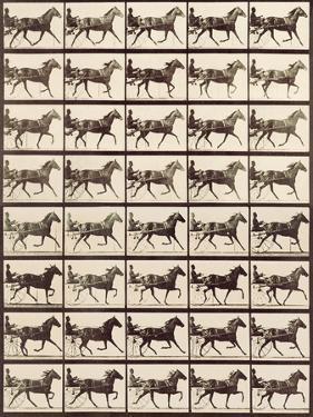Trotting Sulky by Eadweard Muybridge