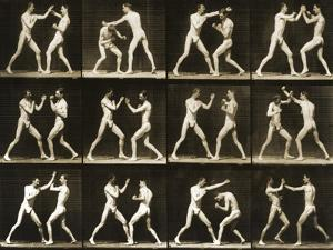 Two Men Boxing, from the 'Animal Locomotion; Series, C.1881 by Eadweard Muybridge