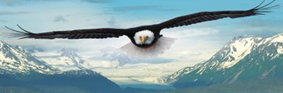 Eagle flying over Mountains