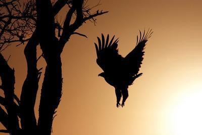 https://imgc.allpostersimages.com/img/posters/eagle-rising_u-L-Q10PQ9R0.jpg?p=0