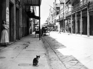 Early 1900s Cat Sitting on Street Older Section of New Orleans,, Louisiana