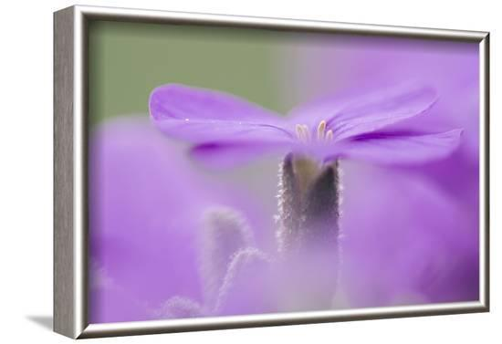 Early blossoming plants with pink blossoms in the botanical garden.-Nadja Jacke-Framed Photographic Print
