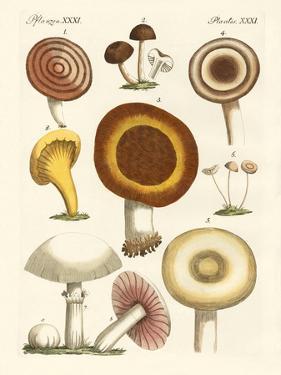 Eatable Mushrooms