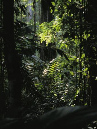 A Rain Forest Scene in the Costa Rican Forest