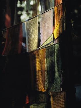 Buddhist Prayer Flags Hang in the Trees in Darjeeling by Ed George