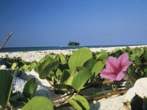 Flowering Vine on Beach by Ed George