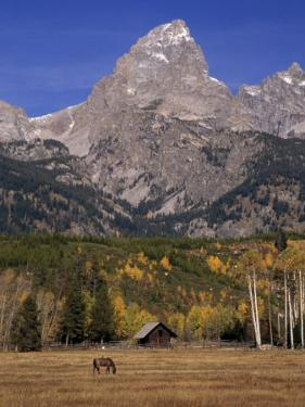 Rugged Mountains and Grazing Horse in an Autumn Landscape by Ed George