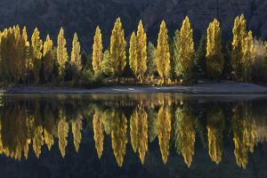 A row of poplar trees reflected in autumnal colours, San Carlos de Bariloche, Patagonia, Argentina by Ed Rhodes