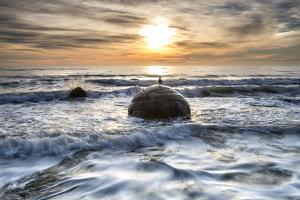 A seagull sat on a Moeraki Boulders at sunrise, Otago, South Island, New Zealand by Ed Rhodes