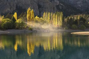 Poplar trees in autumnal colours, San Carlos de Bariloche, Patagonia, Argentina by Ed Rhodes