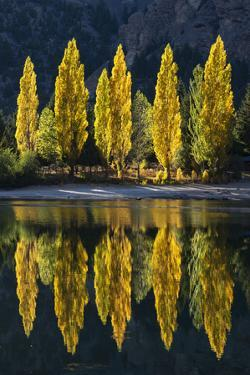 Reflection of poplar trees in autumnal colours, San Carlos de Bariloche, Patagonia, Argentina by Ed Rhodes