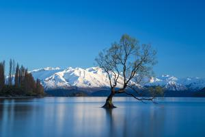 The Wanaka Tree at backed by snow capped mountains, Wanaka, Otago, South Island, New Zealand by Ed Rhodes