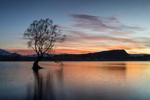 The Wanaka Tree with dramatic sky at sunrise, Lake Wanaka, Otago, South Island, New Zealand by Ed Rhodes