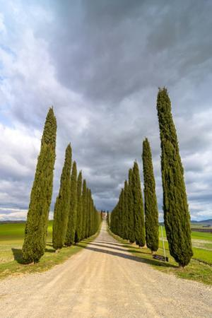 Idyllic Tuscan Landscape with Cypress Alley near Pienza, Val D'orcia, Italy by eddygaleotti