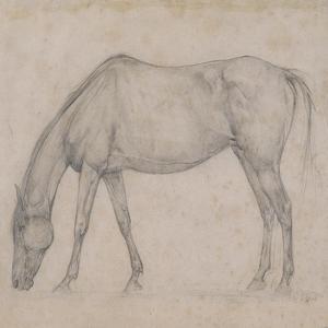 Etude de cheval by Edgar Degas