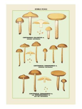Edible Fungi: Half Red Cortinarius