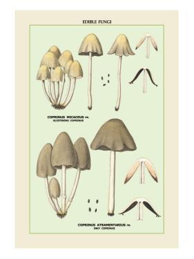 Edible Fungi: Inky Coprinus