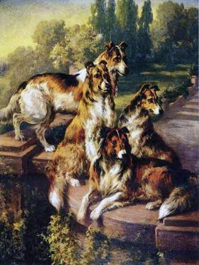 Collies by Edmund Henry Osthaus