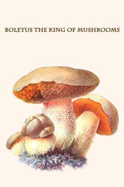 Boletus the King of Mushrooms by Edmund Michael