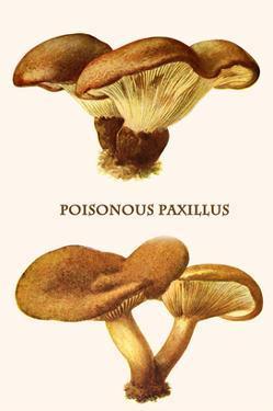 Poisonous Paxillus by Edmund Michael